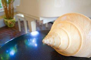 a seashell on a table