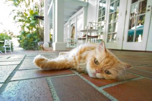 cat laying on a porch