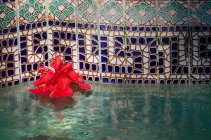 hibiscus flower floating in a decorated pool