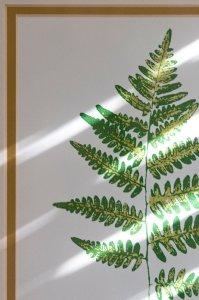 painting of a fern leaf