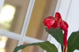 red flower on a houseplant