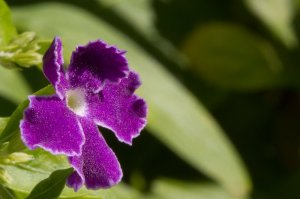 a purple flower