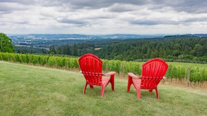 Roya Vineyard and Cottages red chairs view of vineyard