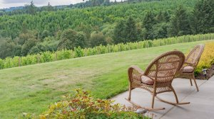 Roya Vineyard and Cottages chairs view of vineyard