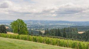 Roya Vineyard and Cottages view of vineyard