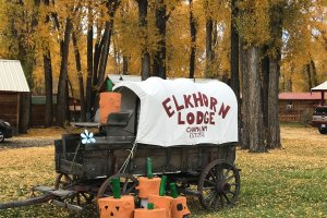 Covered Wagon with Wood Pumpkins