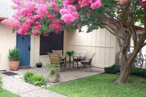 outside patio beneath blossoms