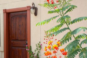wooden door with bright plants