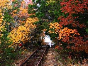 Tram during fall