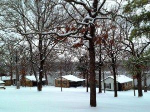 Three oaks during winter