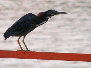 Bird standing on railing