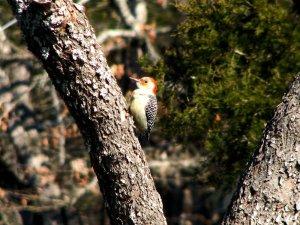 Bird standing on a tree