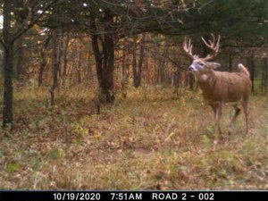 11-19-2020 Day time Trail Cam Image of white tail Deer broad side