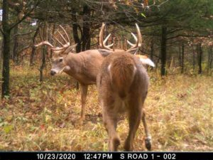 10-11-2020 Day time trail Cam Image of two Deer