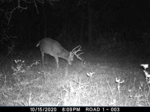 10-11-2020 night time Trail Cam Image of white tail Deer broad side