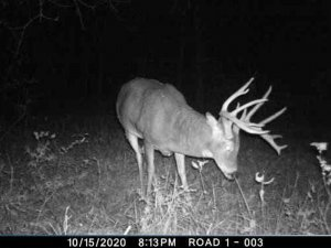 11-10-2020 night time Trail Cam Image of white tail Deer broad side