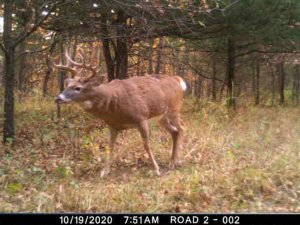 11-10-2020 day time Trail Cam Image of white tail Deer broad side