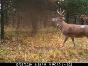 10-11-2020 Trail Cam Image of a Deer
