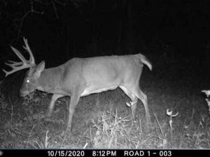 10-11-2020 Trail Cam Image of two Deer