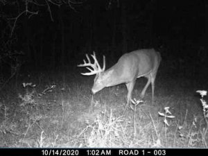 10-14-2020 night time Trail Cam Image of white tail Deer broad side