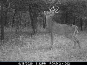 10-18-2020 Trail Cam Image of one white tail Deer