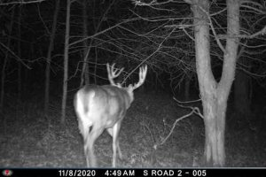 11-8-2020 Night timeTrail Cam Image of one Deer