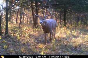 10-30-2020 Trail Cam Image of one Deer