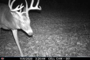 11-6-2020 Trail Cam Image of one Deer