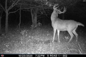 10-23-2020 Trail Cam Image of Deer