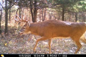 11-5-2020 Trail Cam Image of white tail Deer