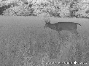 9-13-2019 Trail Cam Image of Deer