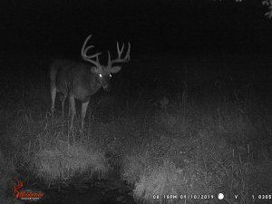 9-10-2019 Trail Cam Image of Deer