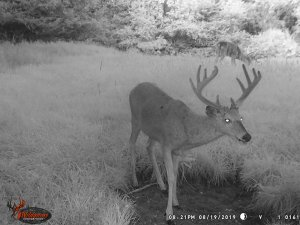 8-19-2019 Trail Cam Image of one Deer