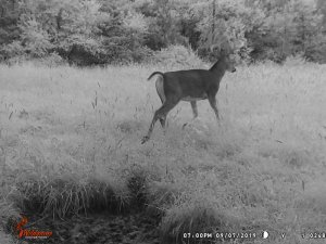 9-7-2019 Trail Cam Image of Deer