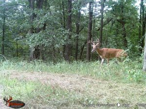 8-11-2019 Trail Cam Image of one Deer broad side