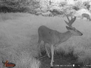 8-19-2019 Trail Cam Image of Deer
