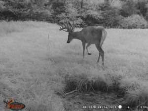 8-16-2019 Trail Cam Image of Deer