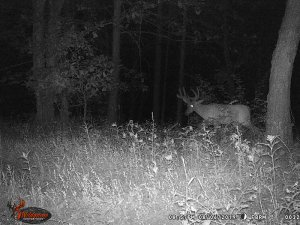 8-6-2019 Trail Cam Image of Deer