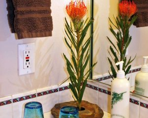 Plant and Glasses on Bathroom Counter