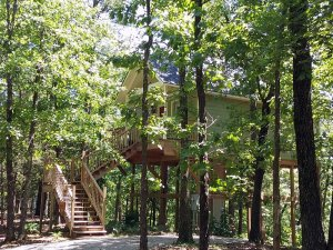 wooden stairs leading to treehouse