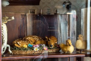 deer and chicks in cabinet of curiosities