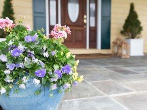 Flower pot infront of door