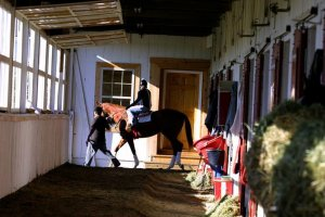 Mounted rider leaving barn