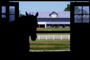 horse in shadowed barn