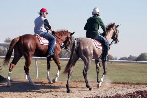 two riders on horses side by side