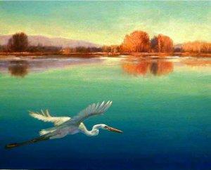 egrett gliding over lake