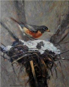 robin building nest in snow