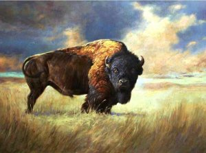 bison in the tallgrass
