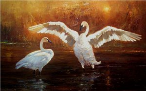two swans at dawn