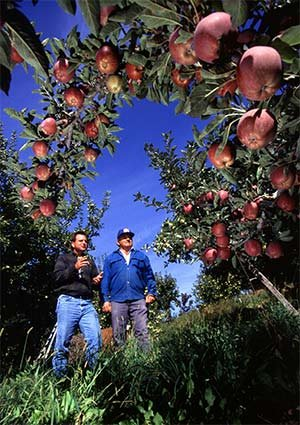 apple orchards in Southwest Wisconsin Photo by Scott Bauer, USDA ARS [Public domain], via Wikimedia Commons